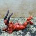 Divers142
